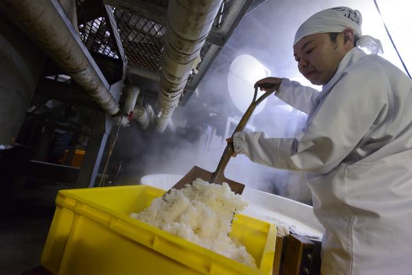 Making sake at Tsuji Honten Brewery in Katsuyama city, Okayama Prefecture